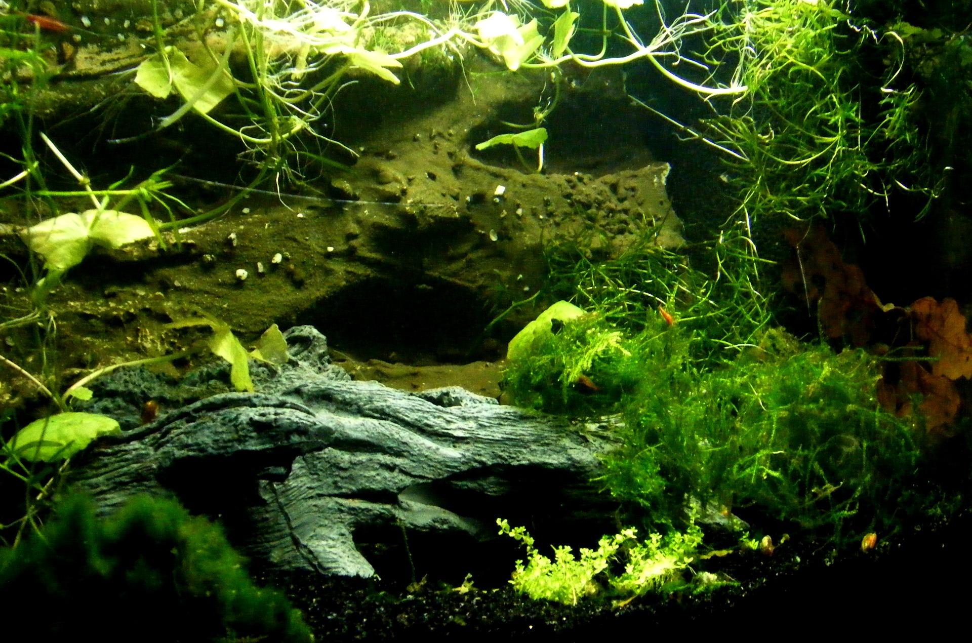 Aquarium Rückwand