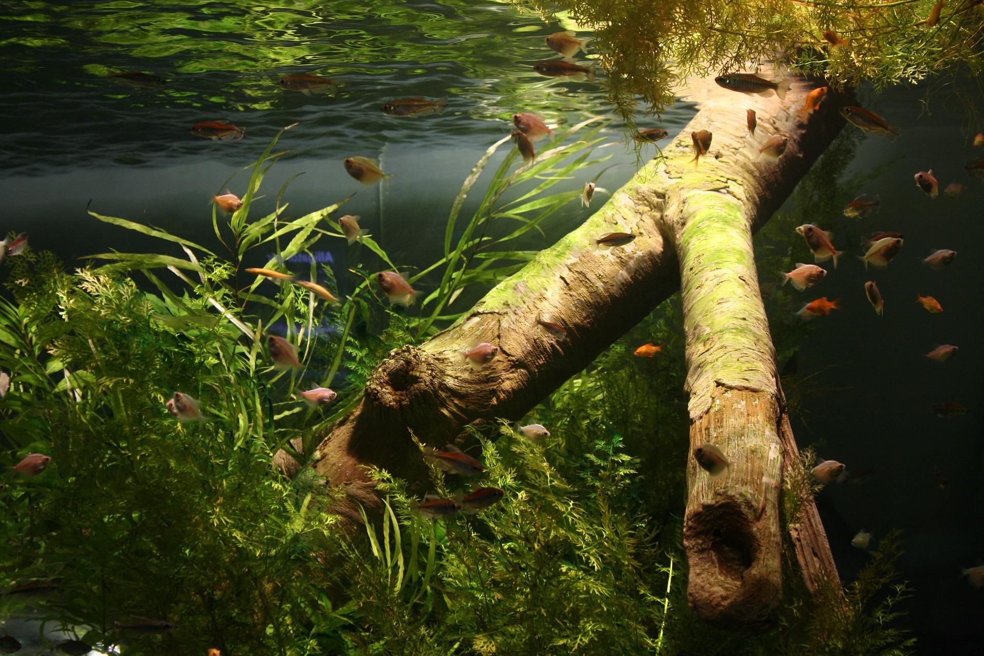 Aquarium Wurzel kaufen