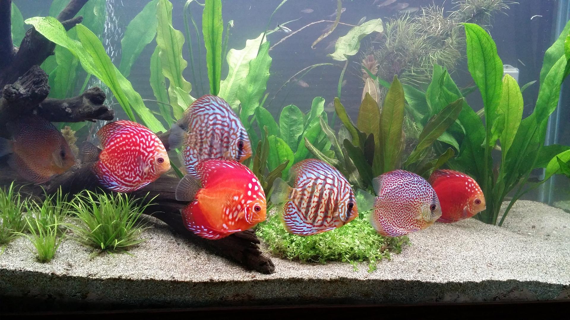 Aquarium Wasserwechsel/