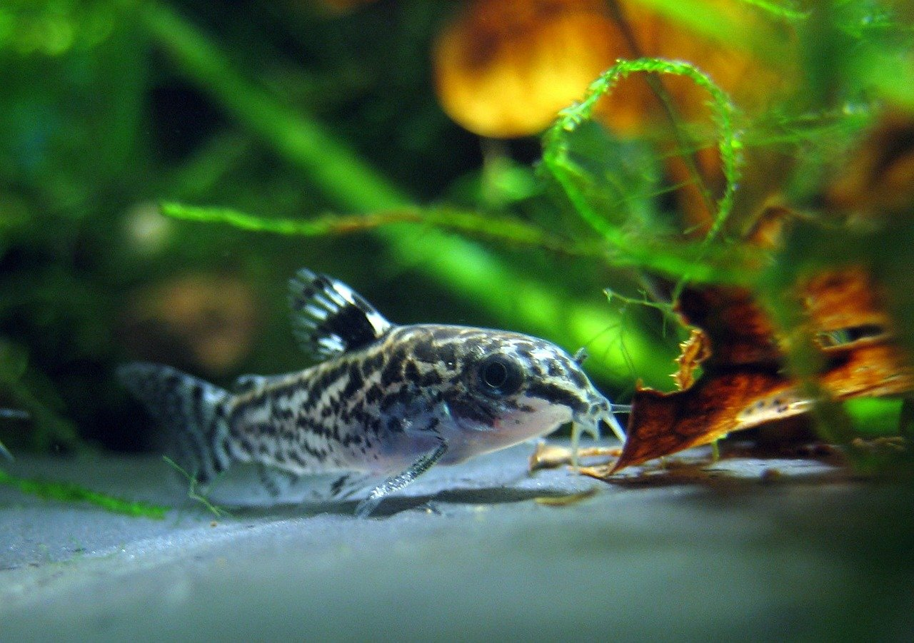 Nano Aquarium Fische kaufen