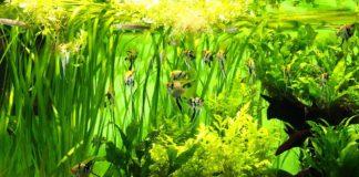 Aquarium Pflanzen Set