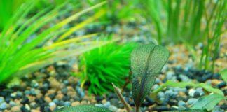 Aquarienpflanzen für Anfänger kaufen